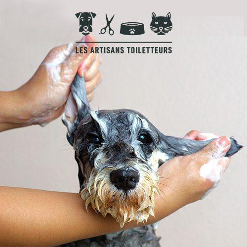 salon-toilettage-chartrons-chien-chat